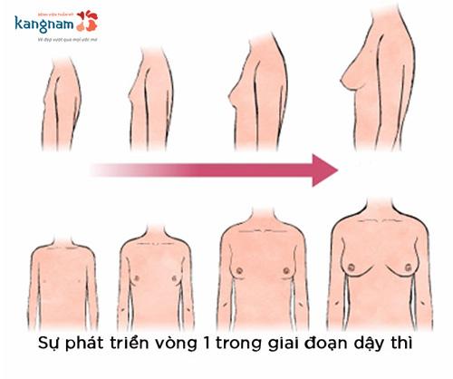 cách làm ngực phát triển nhanh ở tuổi dậy thì